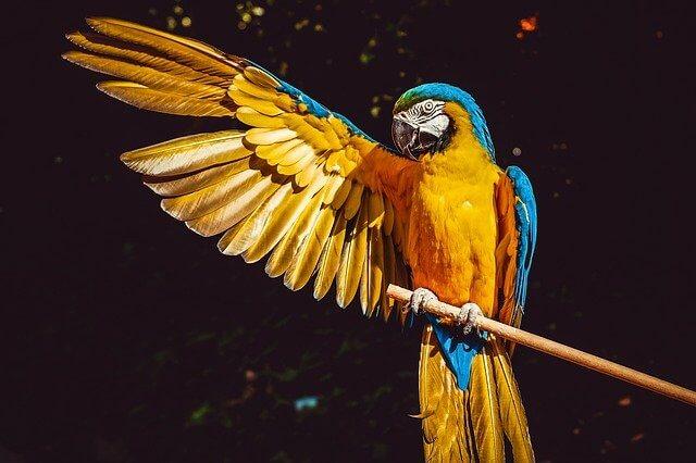 Fractures in Birds