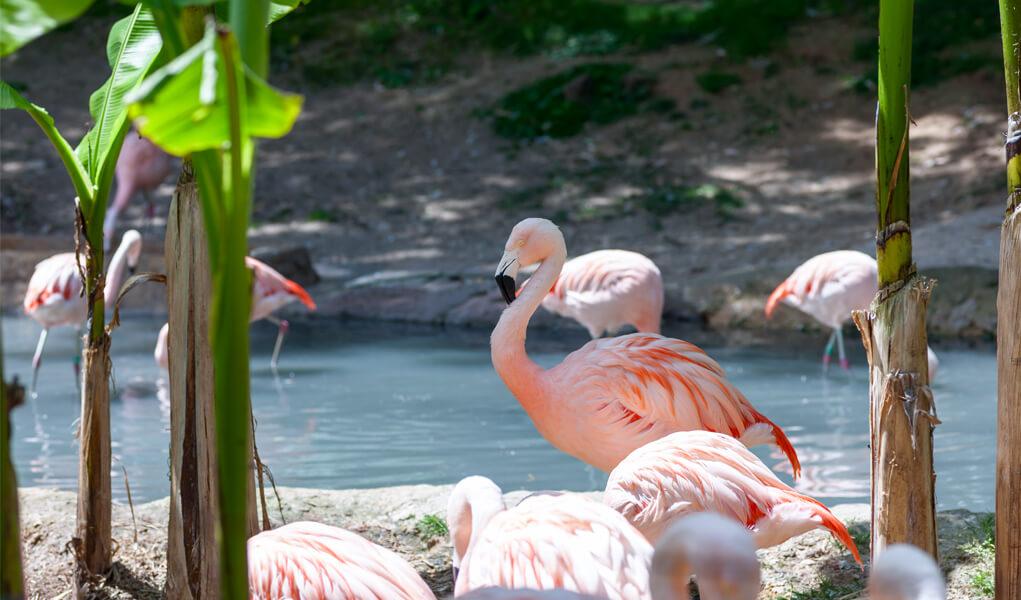 الخواضون: ما الذي يميز هذه العائلة من الطيور؟
