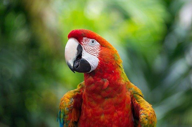 نقص فيتامين أ في الطيور
