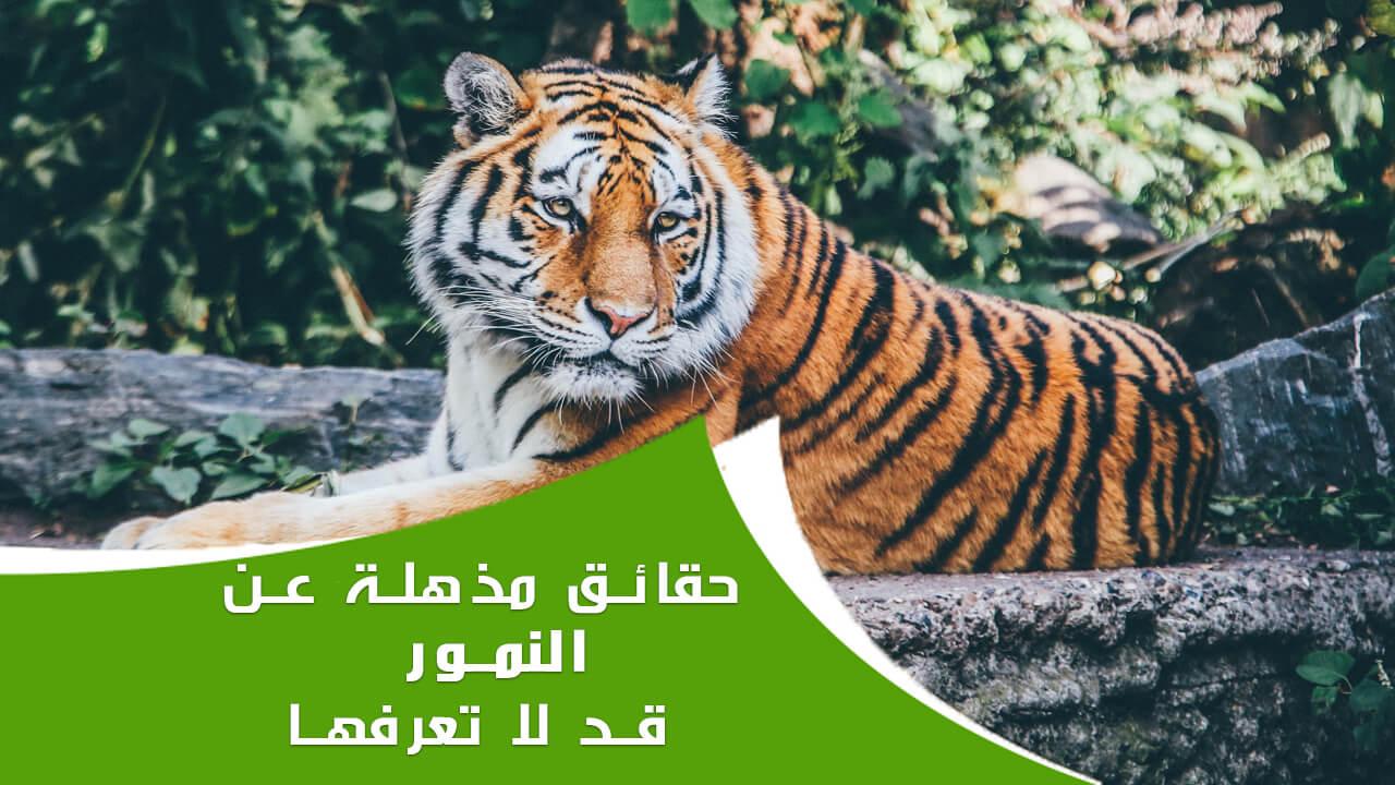 20 حقيقة ربما لم تكن تعرفها عن النمور