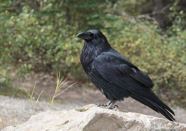 Gastrointestinal Parasites in Birds