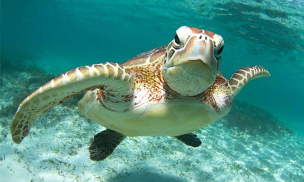 10 حقائق مثيرة للاهتمام حول السلاحف