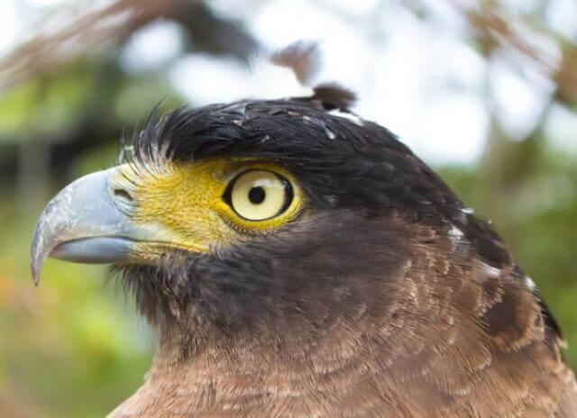 اضطرابات العين الشائعة عند الطيور