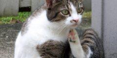 5 نصائح لمحاربة القمل في القطط