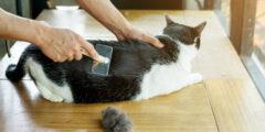 6 أسباب محتملة لتساقط شعر القطط