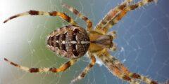 أكثر 10 عناكب خطورة في العالم