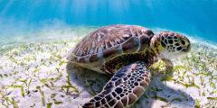 سلحفاة البحر : الوصف والنظام الغذائي والسلوك