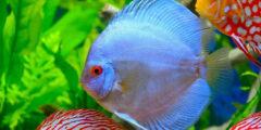 حقائق ومعلومات عن سمكة القرص