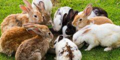 دليل كامل لأفضل سلالات الأرانب