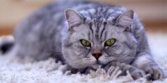 ماذا تعتقد القطط عنا؟ قد تتفاجأ