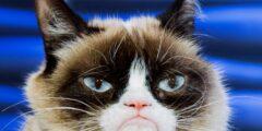5 أشياء يرغب قطك في معرفتها