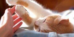 مشاكل صحية للقطط الأكثر شيوعًا