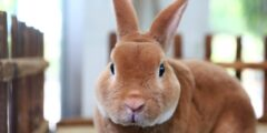كيف تحدد جنس الأرنب؟