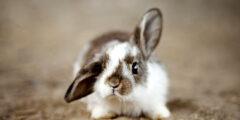 كيف تحدد عمر الأرنب؟