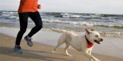 كيف تركض مع كلبك؟