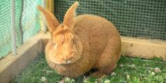 إطعام الأرانب: كيف تطعم أرنبك بشكل صحيح؟