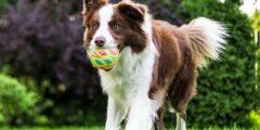 تظهر الدراسة أن كلابنا لديها تغيرات شخصية عميقة مع تقدمهم في العمر!