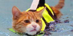 لماذا تكره القطط الماء؟