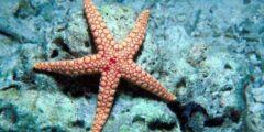 معلومات وحقائق عن نجم البحر