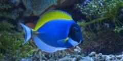 معلومات وحقائق لا تصدق عن سمكة تانغ
