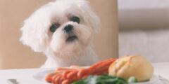 الأطعمة التي تشكل خطورة على صحة الكلاب